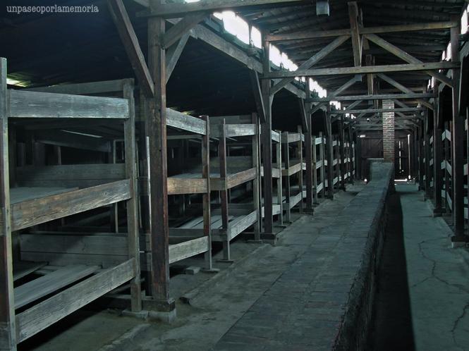 Auschwitz II-Birkenau : couchettes en bois dans les baraquements